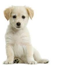 Hundefoder til 3 hunde